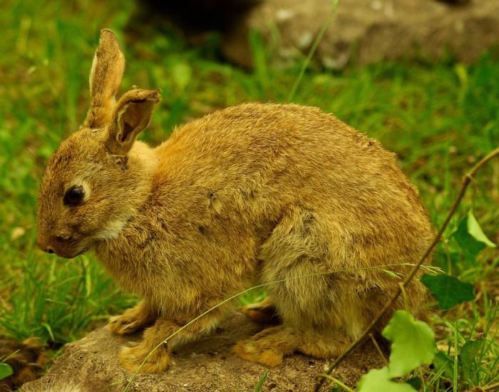 rabbit-799776_1280